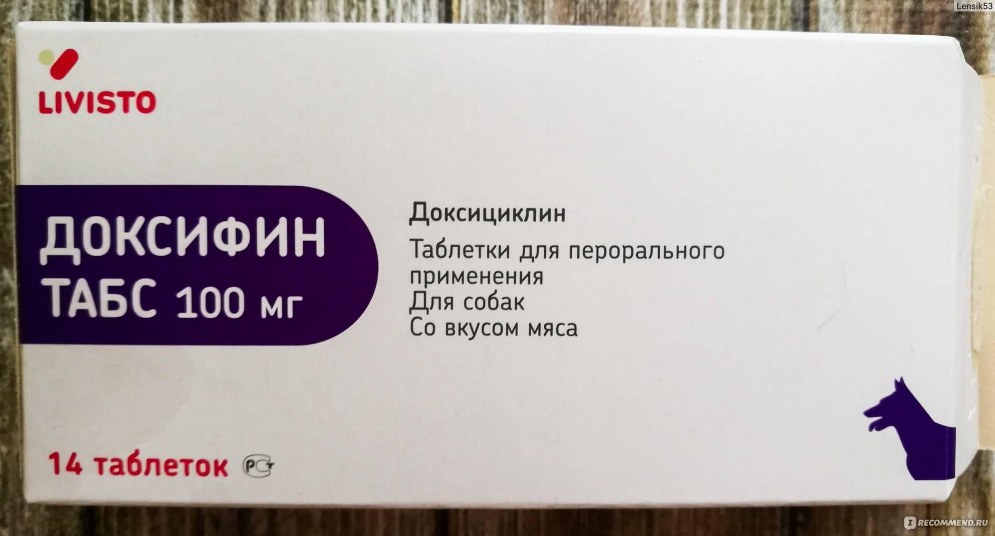 Доксициклин для кошек - инструкция по применению препарата