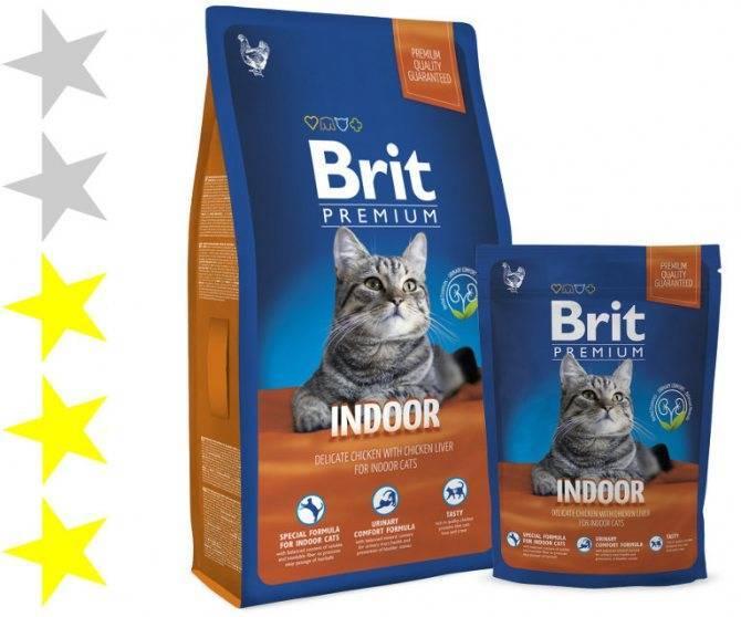 Корм для кошек брит (brit): виды, состав, отзывы