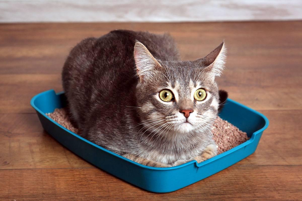 Почему кошка ходит мимо туалета, промахивается. что делать? как самостоятельно сделать правильный лоток