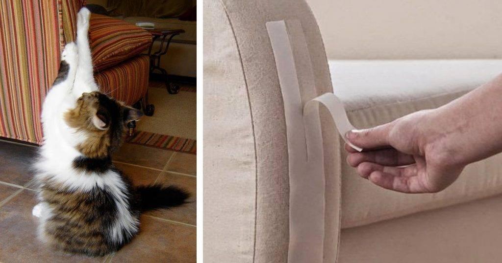 Что делать, когда кошка гадит на кровать