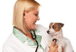5 лучших ветеринарных клиник москвы