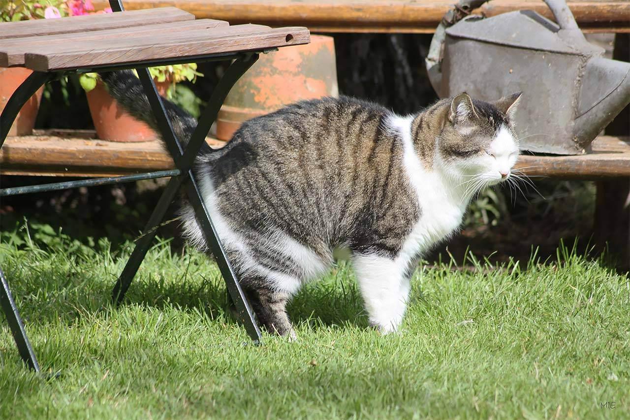 Кошачьи метки: боремся с дурной привычкой