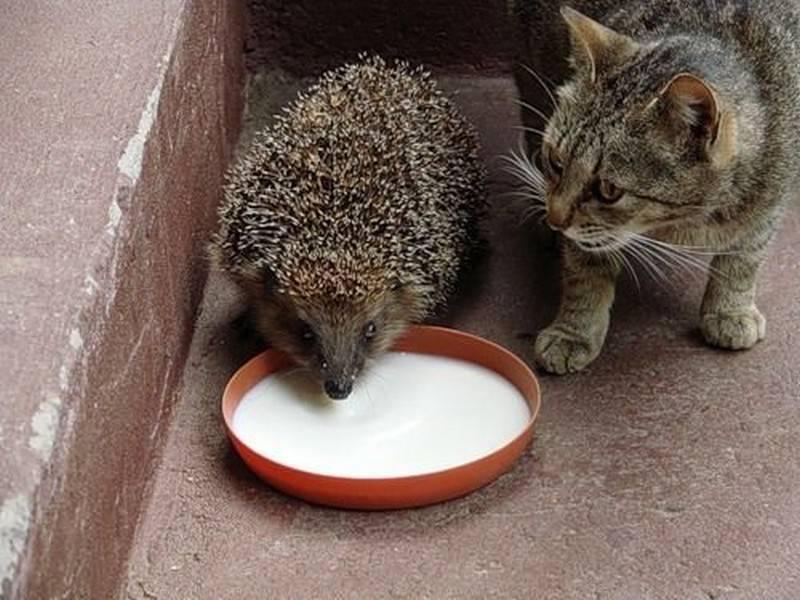 Почему кошки приносят добычу своим хозяевам (5фото)