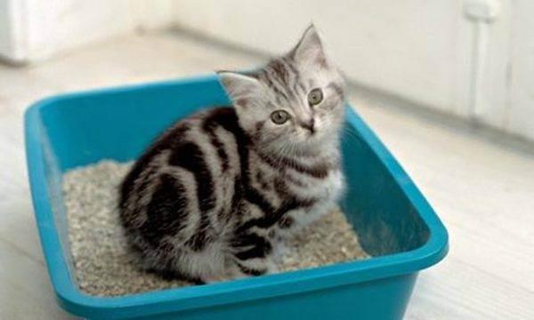 Как приучить к лотку котенка и взрослого кота или кошку легко и быстро: советы ветеринара