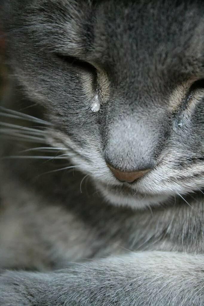Умеют ли коты плакать и по каким причинам это происходит постоянно
