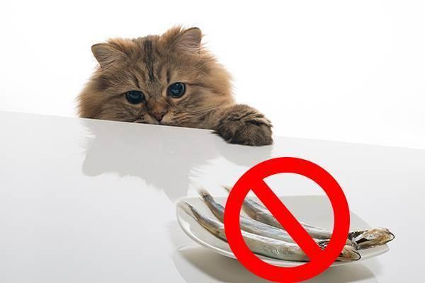 Восстановление кошки после операции - как восстановиться после полостной операции - запись пользователя юля (juleka84) в сообществе домашние животные в категории болезни любимцев - babyblog.ru