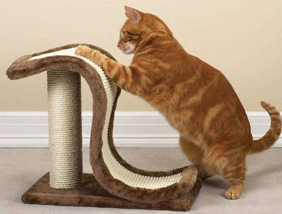 Как отучить кота драть обои: эффективные советы