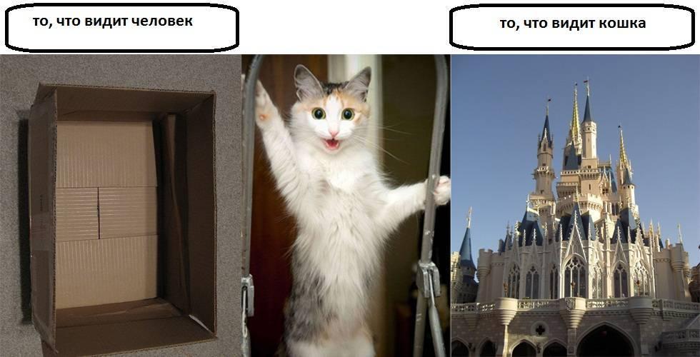 Как видят кошки и коты наш мир, людей, в темноте