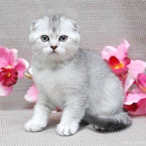 Как распознать, что у кошки глисты: симптомы
