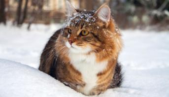 Переохлаждение (гипотермия) у кошек: симптомы и лечение