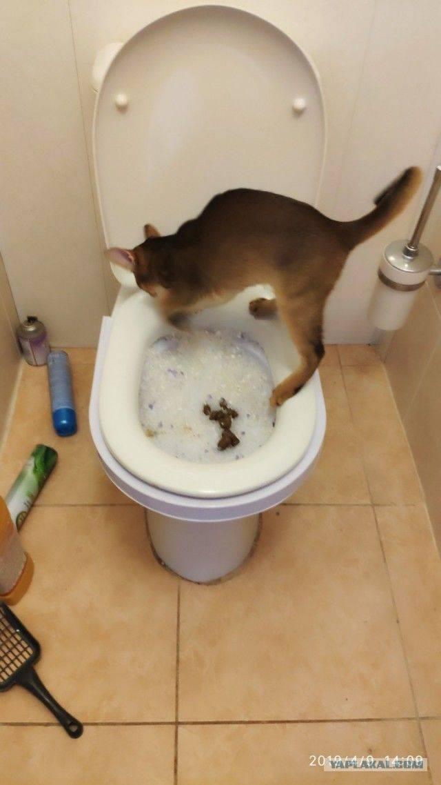 Котенок не какает 2 дня
