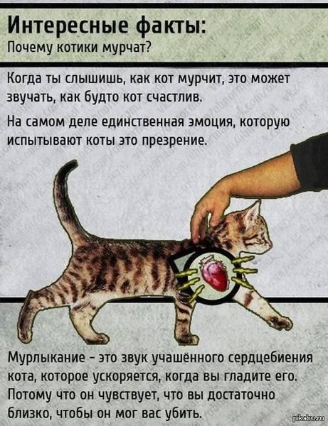 Зачем кошки мнут лапами одеяло?