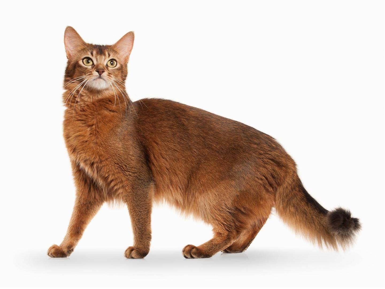 Почему кошка закапывает миску с едой или сркебет лапой рядом с ней, зачем она это делает