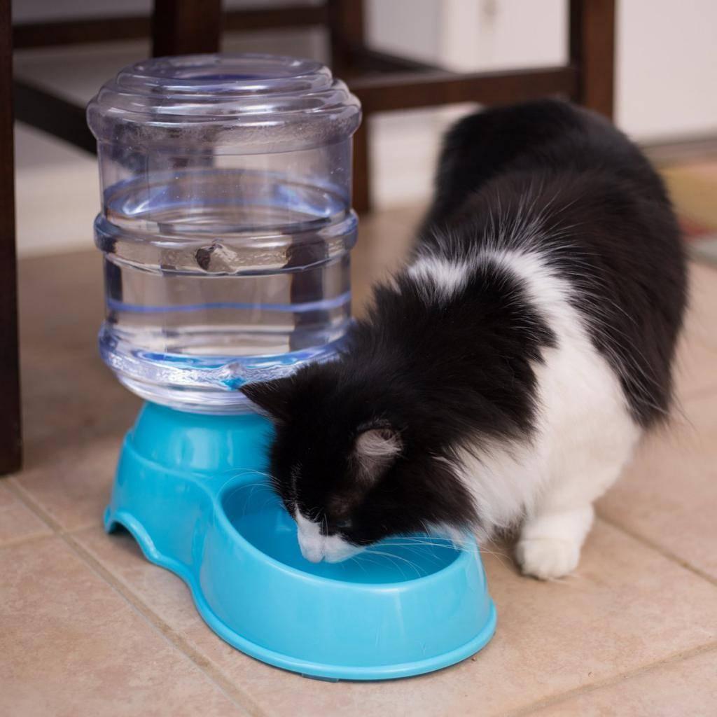 Котенок не пьет воду: что делать, причины, как приучить котенка пить воду из миски