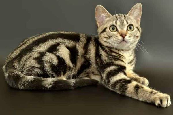 Породы кошек с фотографиями и названиями породы кошек с фотографиями и названиями
