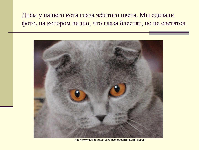Почему у кошек светятся глаза в темноте: объясняем понятно и подробно