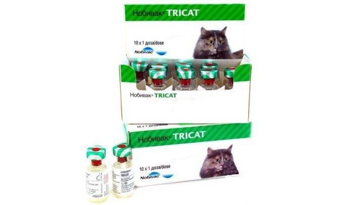 Нобивак трикет трио для кошек: инструкция, отзывы, цена | купить вакцину