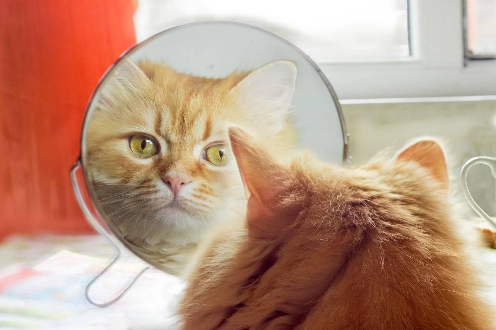 Почему кошки не смотрят в зеркало?