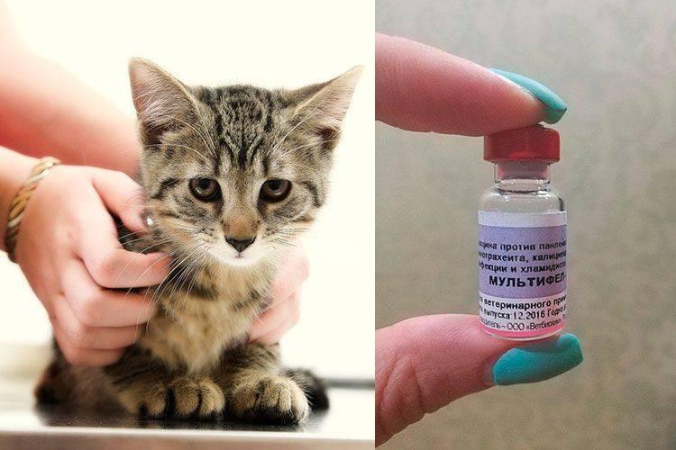 """Вакцина """"мультифел-4"""": инструкция (для кошек)"""