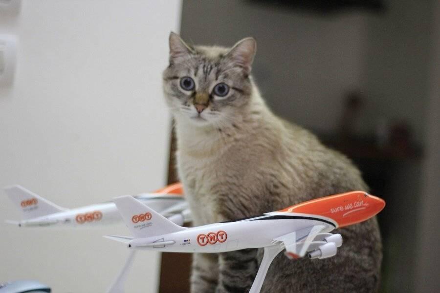 Путешествие с кошкой на самолете