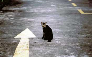 Читать онлайн книгу все кошки возвращаются домой (си) - софья ролдугина бесплатно. 1-я страница текста книги.