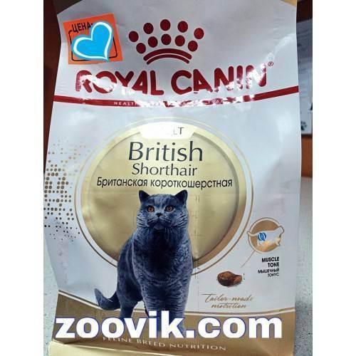 Уход за шотландским вислоухим котенком