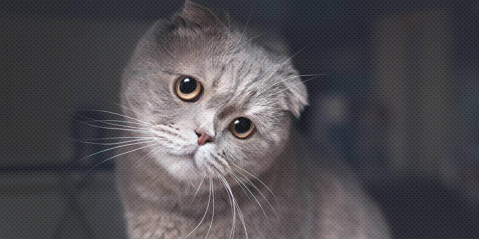 Почему кошка перестала просить кота