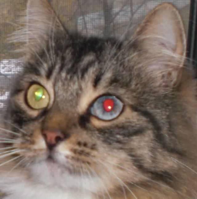 Почему кошки и коты чихают: опасные и неопасные причины