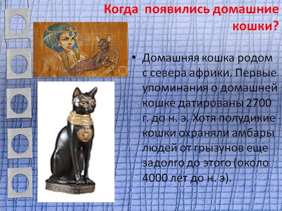 ᐉ как появились кошки? - ➡ motildazoo.ru