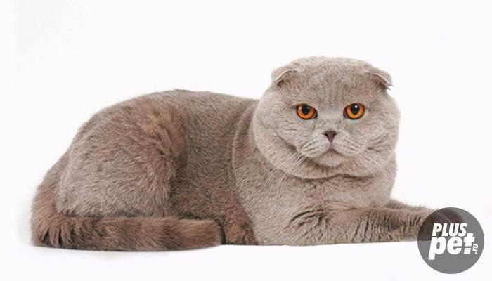 Как начать дрессировать кошку в домашних условиях?