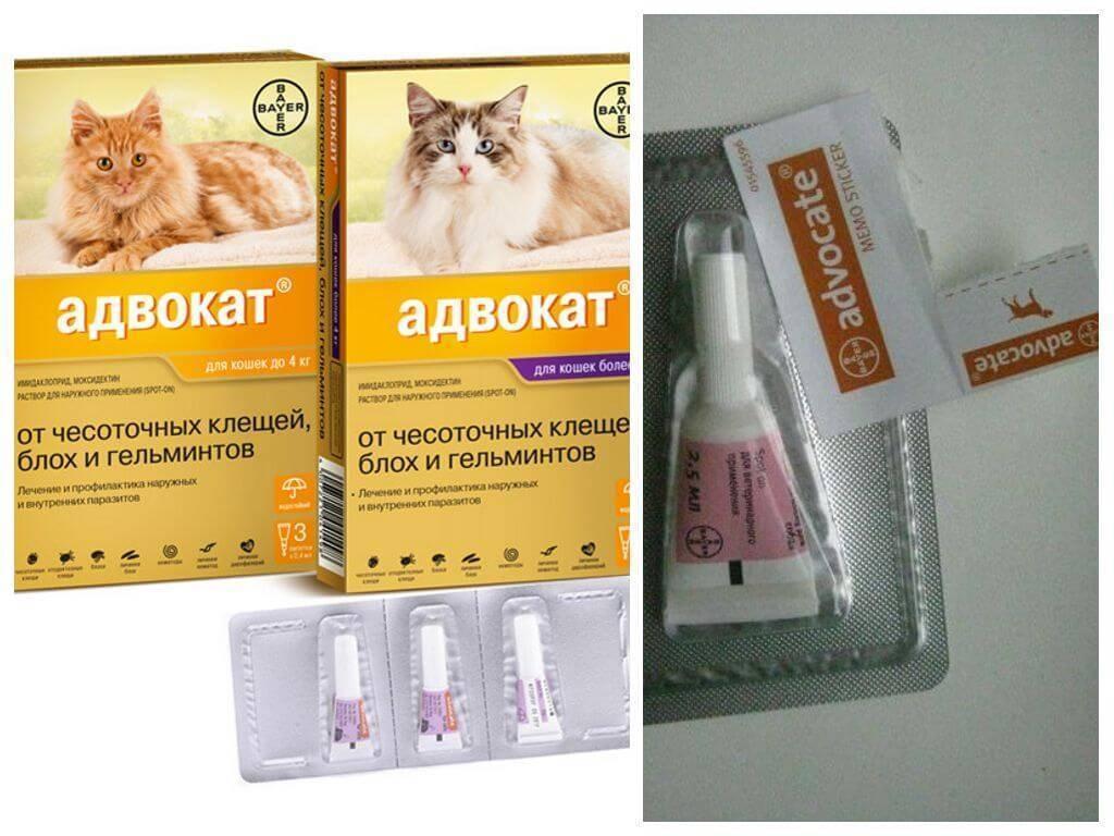 Популярные средства от блох для котят