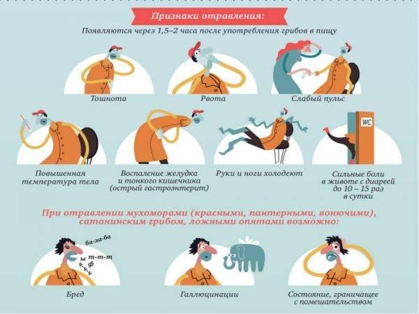 Кошку рвет желчью: причины, диагностика, лечения, диета