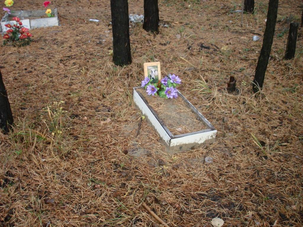 Как хоронят котов домашних в православии. где и как правильно похоронить кошку (деликатная тема)