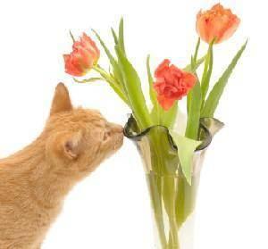 Почему кошки так любят есть домашние цветы