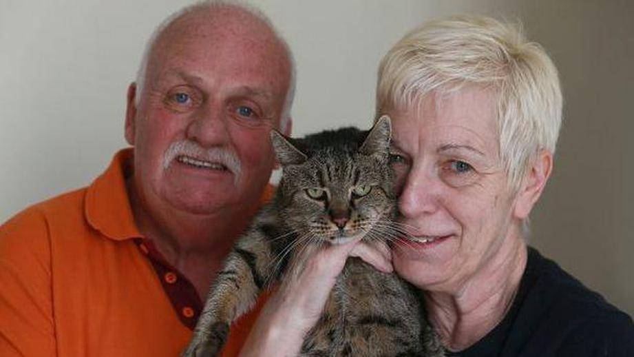 Самый старый кот в мире, россии - список животных-долгожителей
