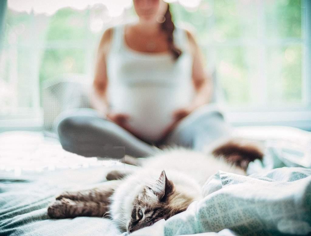 Чем может быть опасна кошка дома во время время беременности?