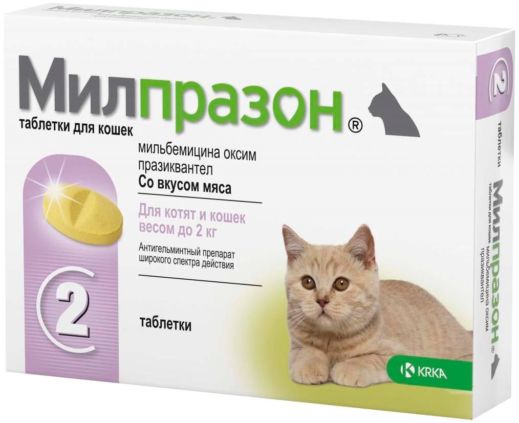 Цестал для кошек: инструкция по применению и противопоказания