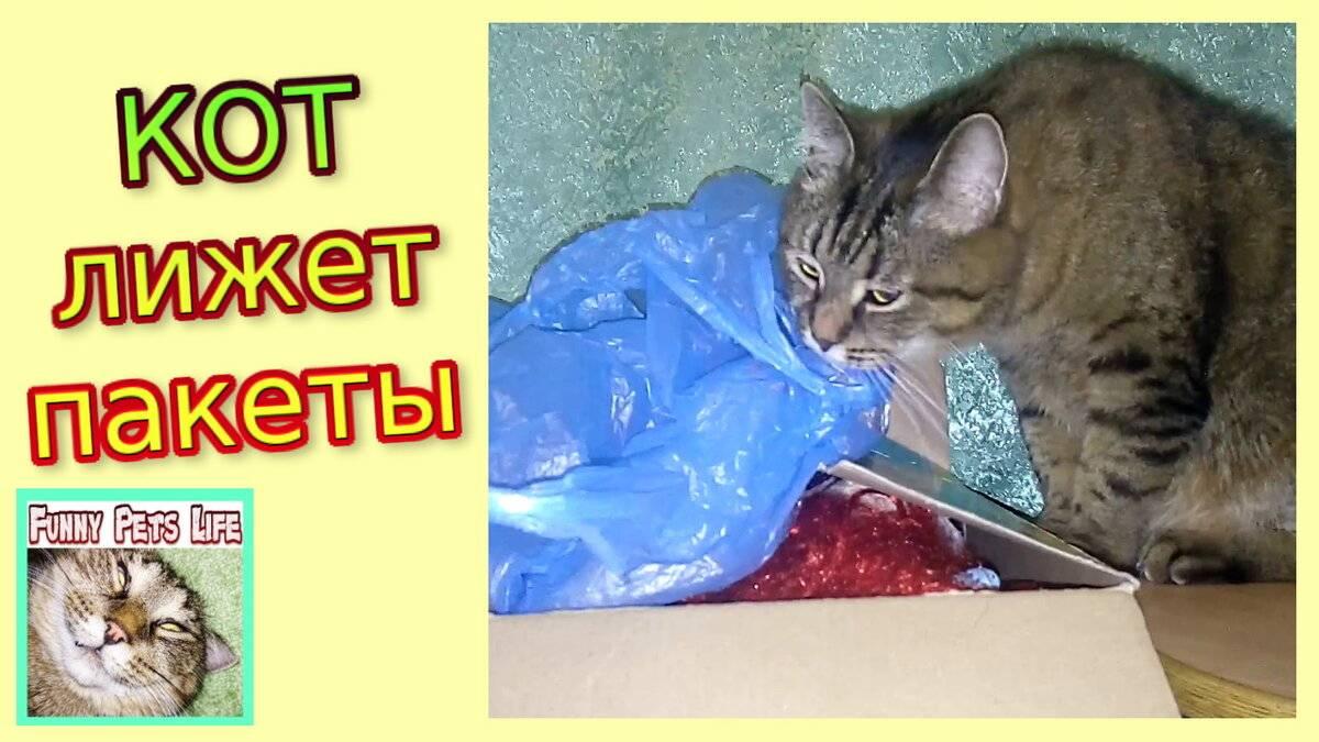 Кот лижет пакеты — причины и как отучить | zdavnews.ru
