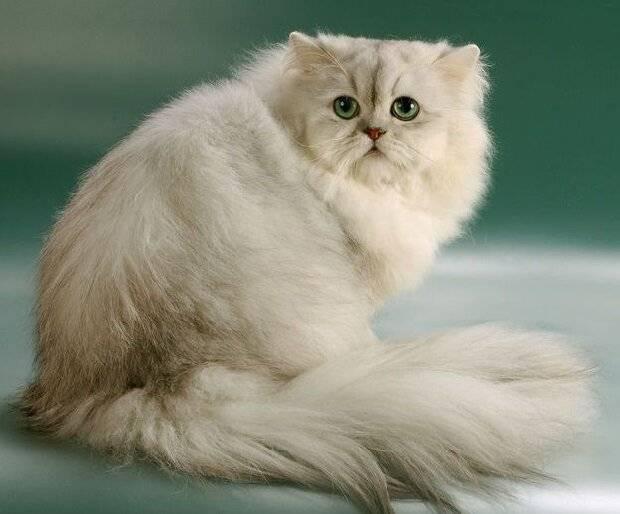 Интересный гороскоп: какая вы кошка в соответствии со знаком зодиака
