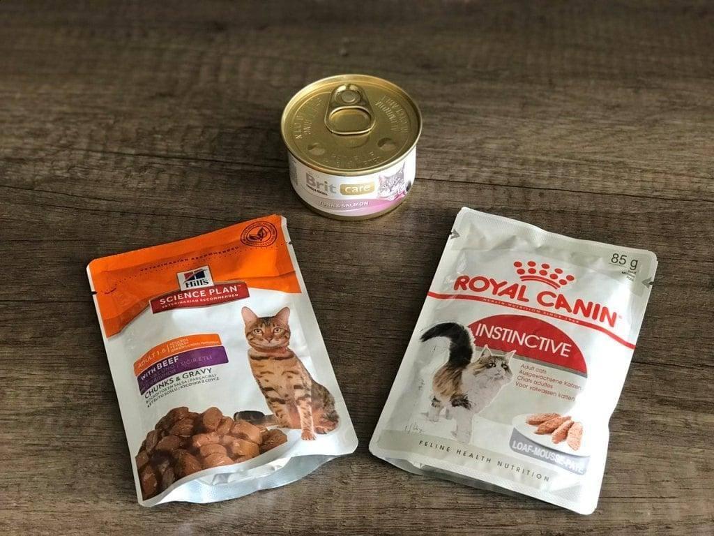 Запор у кошки лечение в домашних условиях: вазелиновое масло и другие средства, причины
