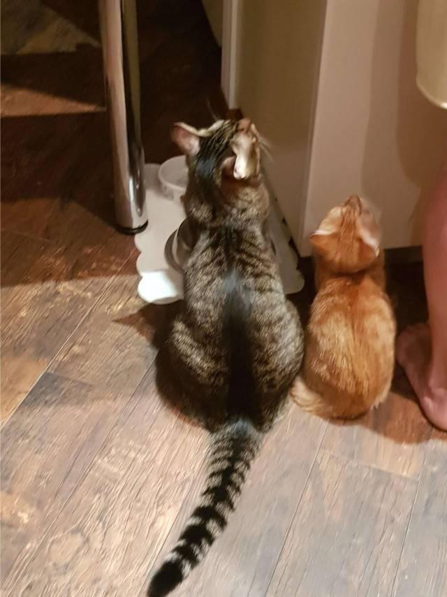 Кот или кошка: кого выбрать для дома?