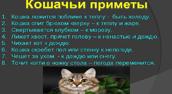 Приметы и поговорки про кошек живущих у вас дома