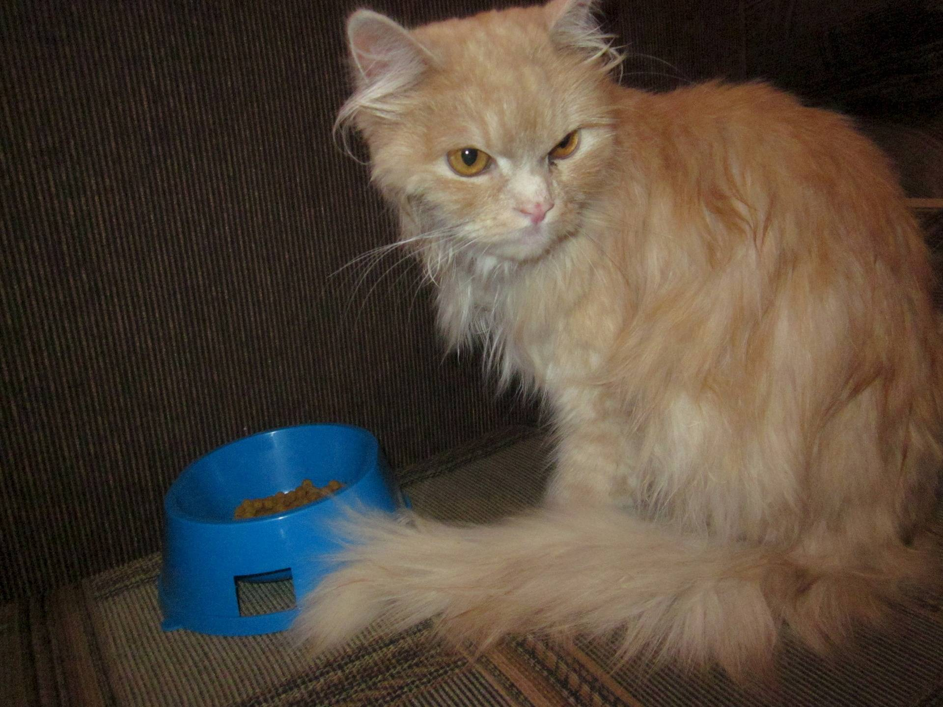Колтуны у кошки: как избавиться в домашних условиях, почему шерсть сваливается в комки?