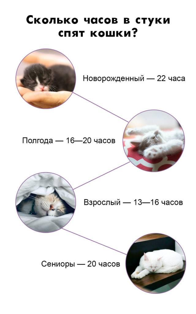 Сколько часов в сутки спят кошки? почему кошки спят так долго - сколько времени длится сон. - petstime.ru
