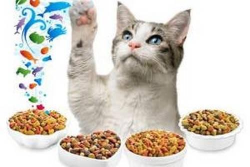 Посоветуйте корм для котёнка шотландца