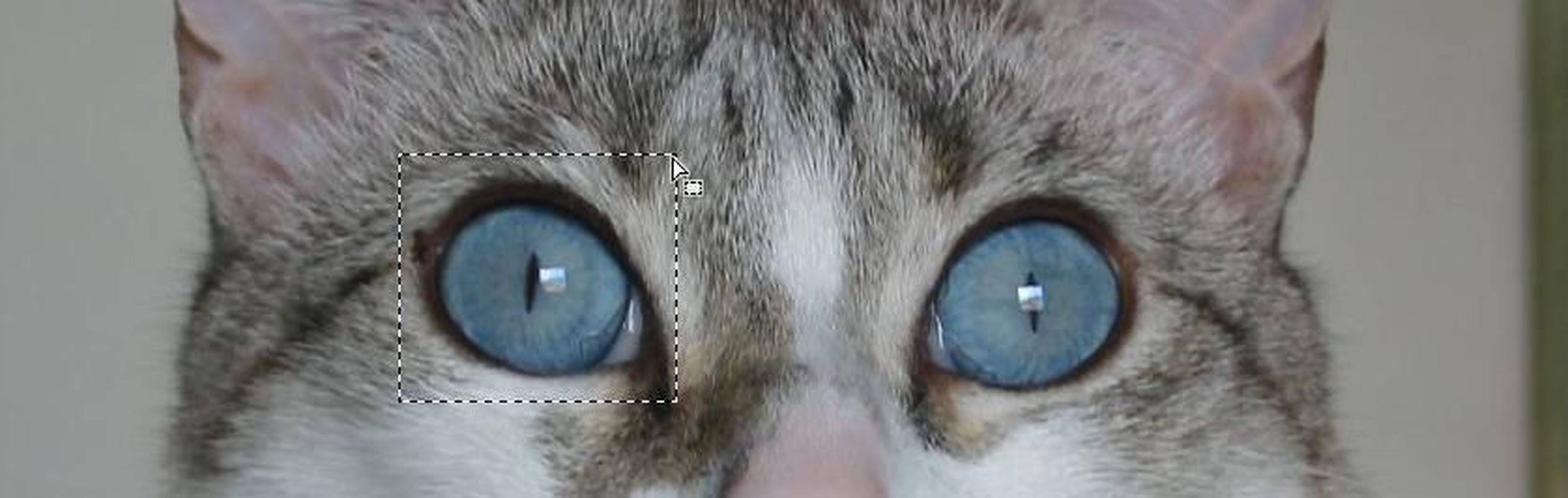 У котенка один зрачок больше другого