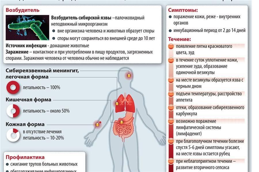Воспаление кишечника у котов симптомы