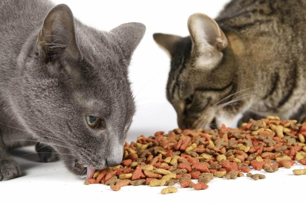 Из чего делают корм для кошек и котов | из чего состоит