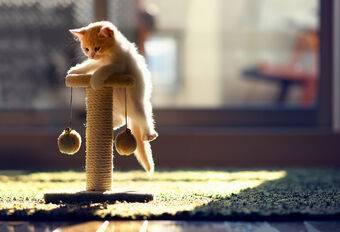 Как перевозить в самолете кошку: правила перевозки