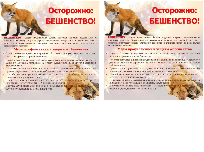 Бешенство у кошек – смертельно опасное заболевание (особенности, пути передачи, лечение и профилактика)